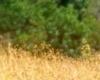 Pic-Zebra-4-copy-100x100