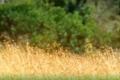 Pic-Zebra-4-copy-700x228