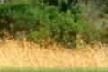 Pic-Zebra-4-copy-925x228