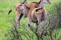 Selous-Game-Reserve-Nature-HD-925x465