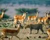 africa-animal-wallpaper-1600x1200-0062-100x100