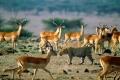 africa-animal-wallpaper-1600x1200-0062-1024x768