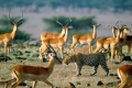 africa-animal-wallpaper-1600x1200-0062-700x400