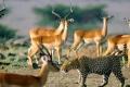 africa-animal-wallpaper-1600x1200-0062-700x865
