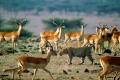 africa-animal-wallpaper-1600x1200-0062-950x640