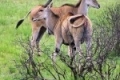 Selous-Game-Reserve-Nature-HD-150x150