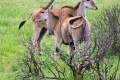 Selous-Game-Reserve-Nature-HD-1600x850