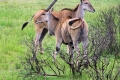 Selous-Game-Reserve-Nature-HD-700x400