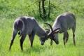 wildlife_south_africa-1386794-300x205