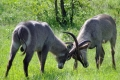wildlife_south_africa-1386794-700x400