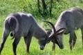 wildlife_south_africa-1386794-925x465